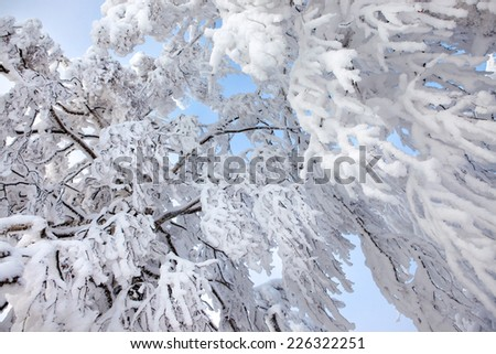 Winter trees covered with fresh snow. - stock photo