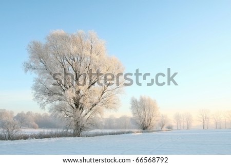 Winter trees covered with frost on a cloudless morning. Photo taken in December. - stock photo