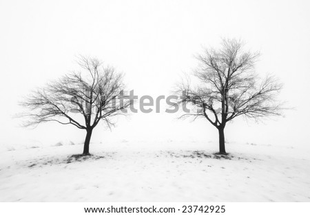 Winter trees in fog and snow