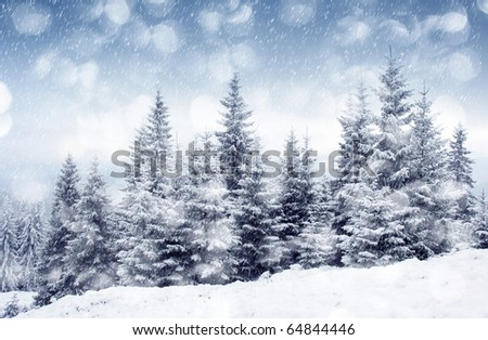Winter trees in mountains covered with fresh snow - stock photo