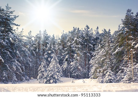 Winter trees in the mountains covered with shiny snow