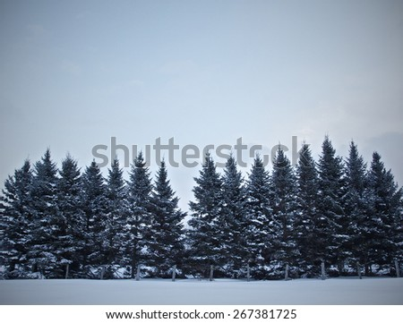 Winter trees in the snow. - stock photo