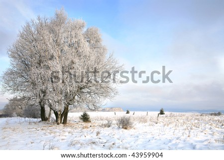 Winter trees, landscape near small, picturesque Pasterka village in Poland. Famous tourist attraction, Table Mountain. - stock photo