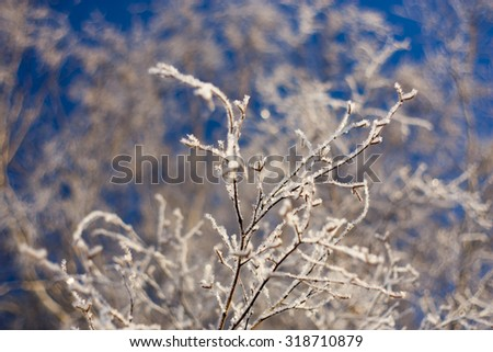 winter trees on snow in sunny day - stock photo