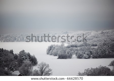 winter trees on snow white background - stock photo