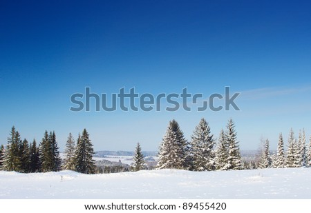 Winter trees snowy field and clear blue sky - stock photo