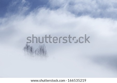 Winter trees top showing up from the white clouds in the mountains - stock photo