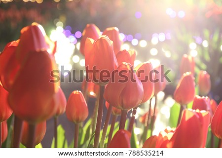 https://thumb7.shutterstock.com/display_pic_with_logo/187631900/788535214/stock-photo-winter-tulip-light-up-788535214.jpg