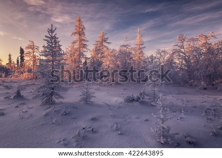 winter tundra. beautiful winter landscape. winter forest - stock photo