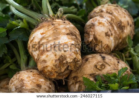 Winter vegetables. Celery at a street sale. Root celery and leaves of celery. - stock photo