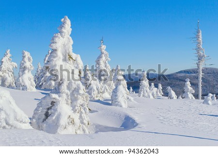 Winter view of snow covered mountain and trees with blue sky in the background (Mountains Jeseniky, Czech Republic)