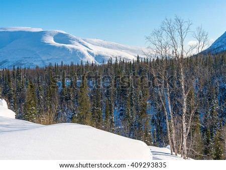 Winter view of snowy mountains. In the foreground Birch. Sunny day. - stock photo