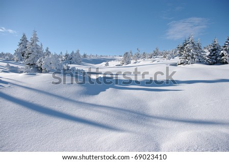 Winter view with snow surface and trees - stock photo