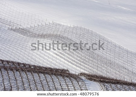 Winter vineyards in Oltrepo Pavese, Italy. - stock photo