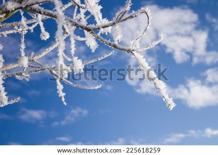 winter wonder land - icy tree branches - stock photo