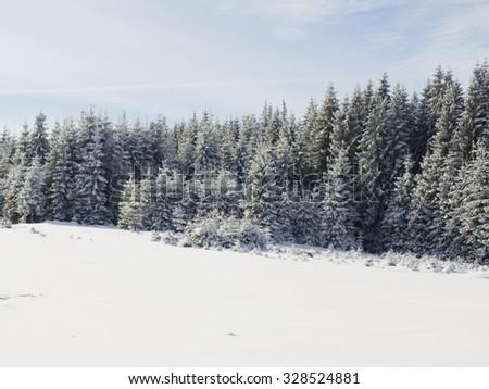 Winter wonderland  - stock photo