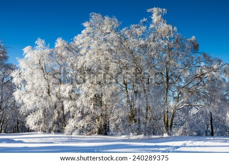 Winter Wonderland - Broadleaf trees covered in snow, Taunus, Germany - stock photo