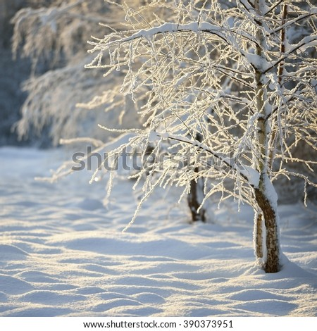 Winter wonderland in snow covered forest and rural area. Latvia - stock photo