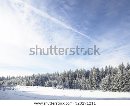 Winter wonderland mountain trees - stock photo