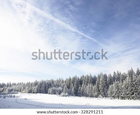 Winter wonderland mountain trees - stock photo