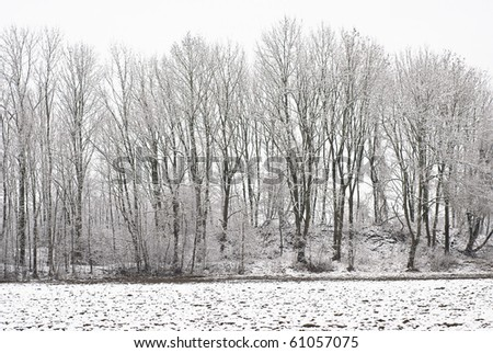 Winter Wonderland of a Forest after a Snowstorm - stock photo