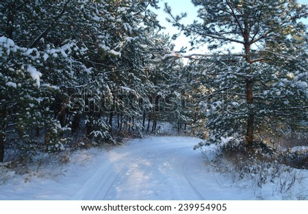 winter wood  - stock photo