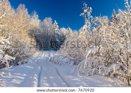Winter wood landscape with a snow on branches - stock photo