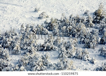 Winter wood. The top view. - stock photo