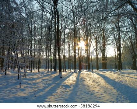 Wintersun in snowy forrest - stock photo