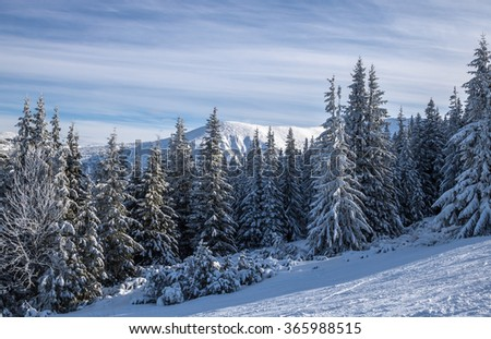 Wintertime pine forest covered by snow in the Tatras, Slovakia - stock photo