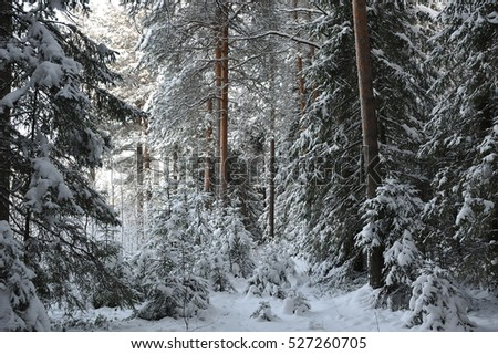 wintery snow covered forest view.