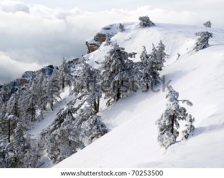 Wintry forest on mountain. - stock photo