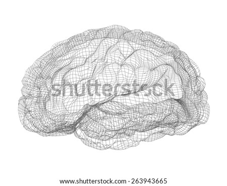 Wire-frame of human brain. Isolated on white background - stock photo