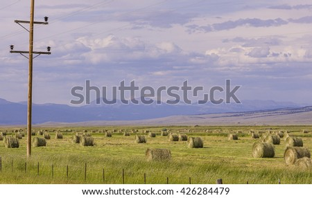 WISDOM, MONTANA, USA - CIRCA AUGUST 2004: Round bales of hay, during harvest in the Big Hole valley. - stock photo