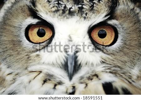 Wise eyes - stock photo
