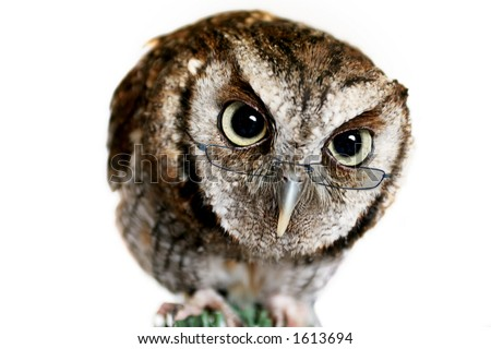 Wise Owl wearing Reading Glasses - stock photo