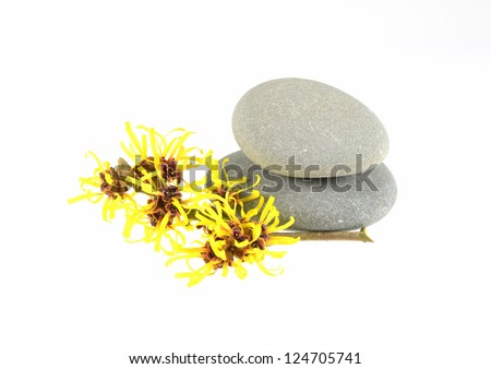 Witch Hazel and Zen Stones - stock photo