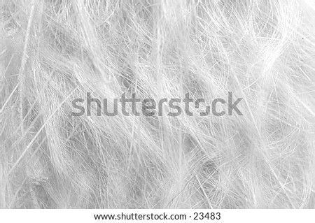 Witer fibers - stock photo