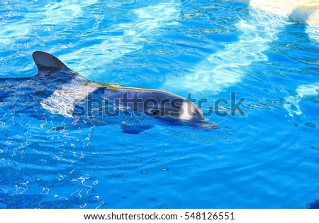 With some shadows on the water, a dolphin is in a relax state