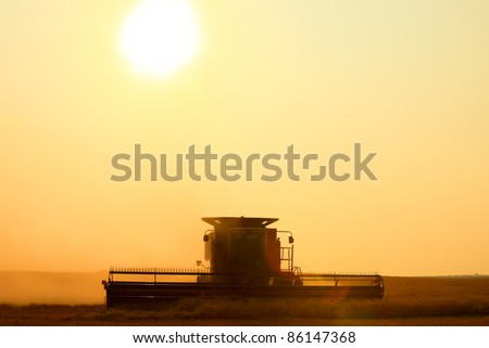 With the sun hanging low on the horizon, a combine harvest wheat in the middle of a farm field. - stock photo