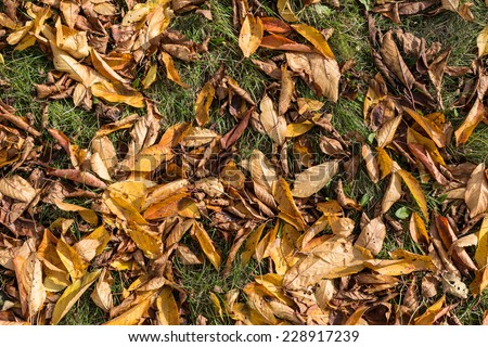 Withered autumn leaves on green grass