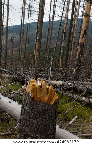 Withered coniferous forest in the mountainous terrain, Beskid Slaski Skrzyczne area, Poland - stock photo