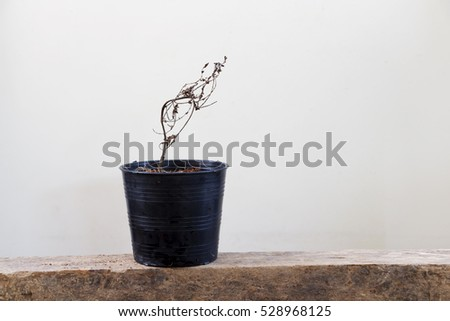 Withered plants in pots