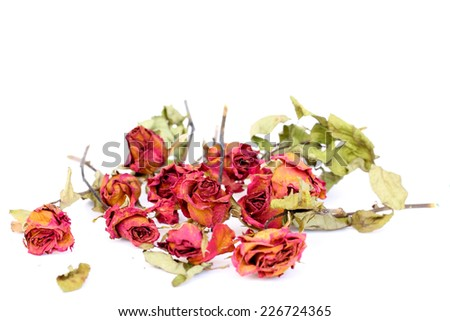 Withered roses and petals scattered on white background. - stock photo