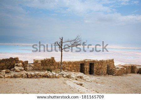 Withered tree against the Dead Sea located in the distance, Masada, Israel - stock photo