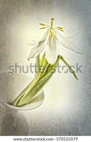 Withered tulip in a vase with texture overlay - stock photo