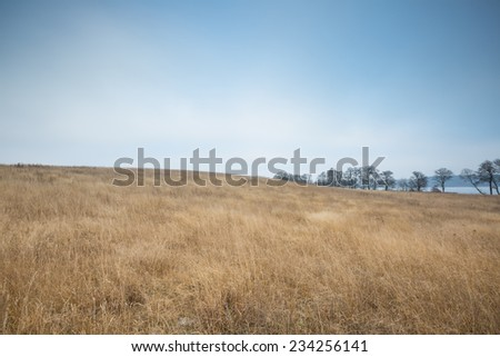 withered yellow grass field at autumn