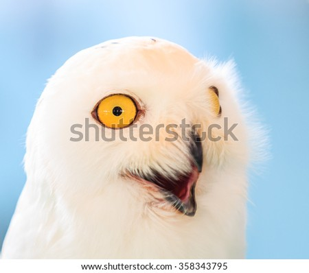 Wnowy owl - White Owl - stock photo