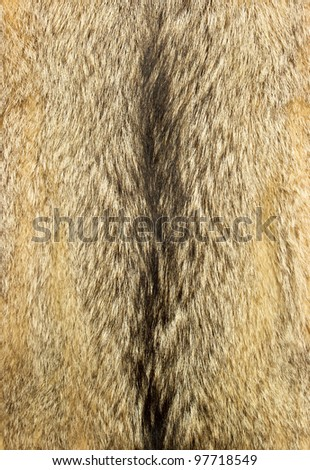 Wolf fur texture for background - stock photo
