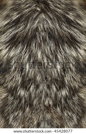 Wolf Fur up-close - stock photo